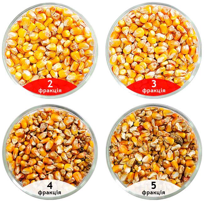Насіння кукурудзи очищені на сепараторі САД, очищення кукурудзи