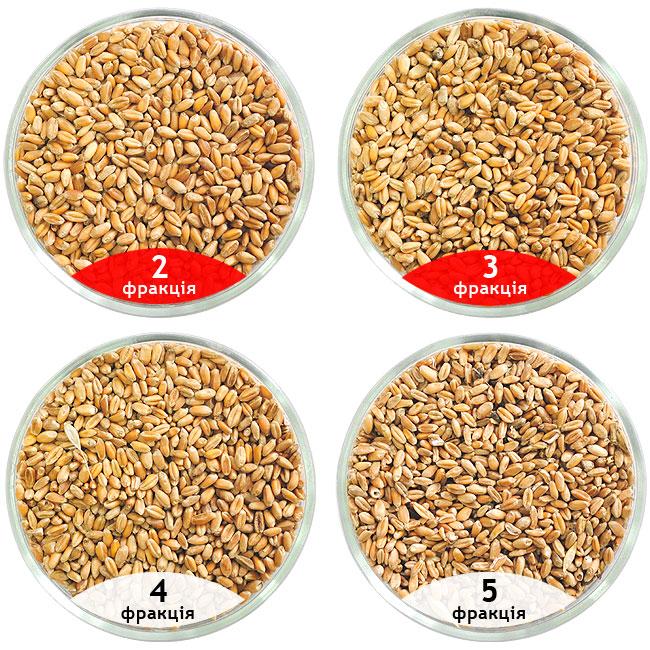 Калібрування пшениці, очищення пшениці на сепараторі САД