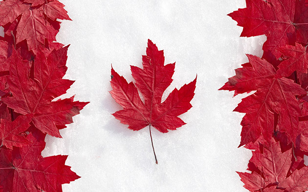 Flag of Canada living leaves